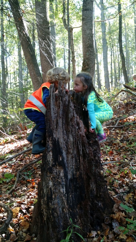 When given the opportunity, children choose challenge. With the absence of branches, children must find small handholds on this rotting stump.