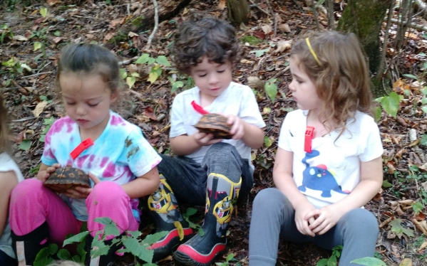 Students examine two box turtles we found in the forest one morning.